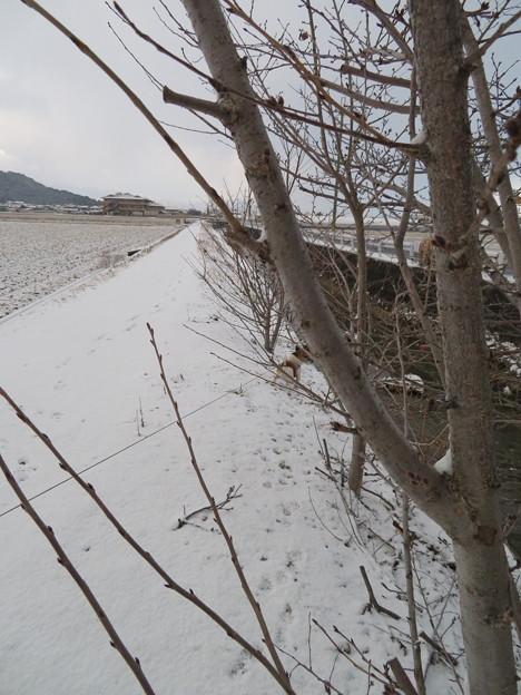 今年初の積雪