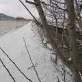 写真: 今年初の積雪