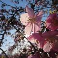 写真: きれいな春でしょう~