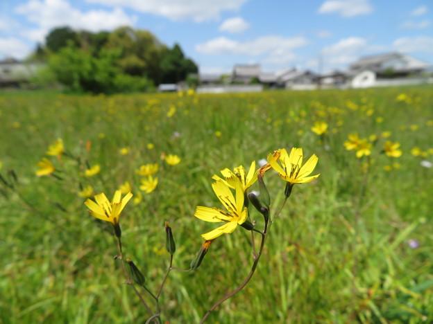 春いっぱい草原