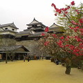 写真: 松山城。伊予はもう梅の季節ですか。