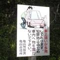 Photos: 路傍の泥棒