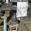 Photos: 墓参りで出くわす