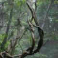 Photos: 森の奥