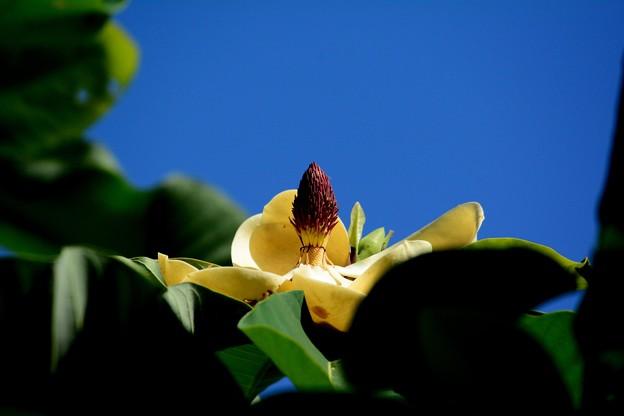 朴の木の花