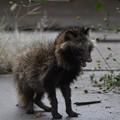 Photos: 狸