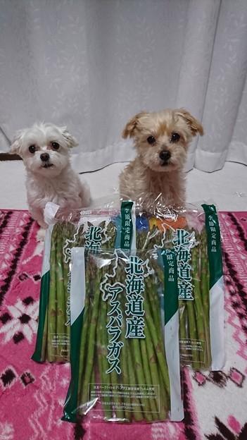北海道産アスパラ