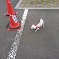 Photos: なにこれー!!!