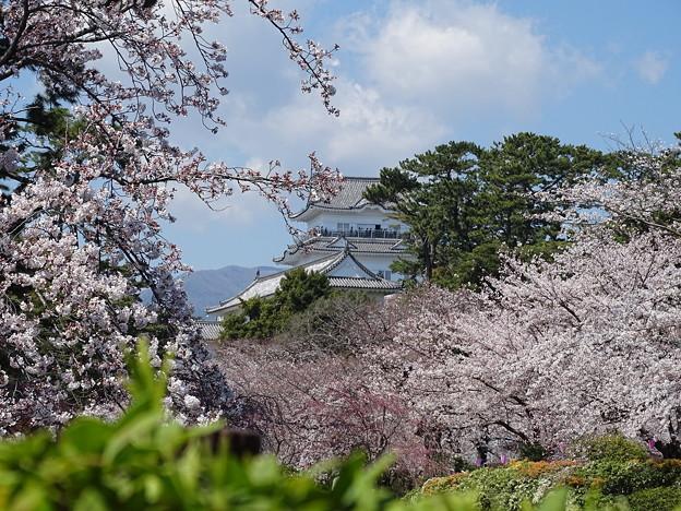 桜越しの小田原城