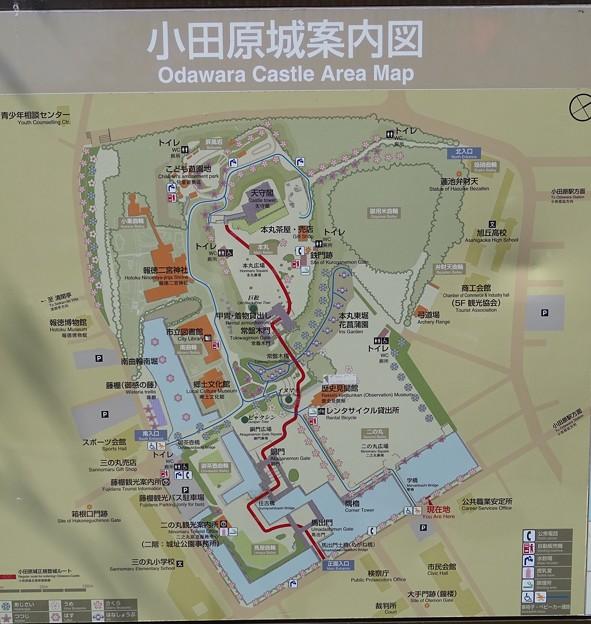 小田原城案内図