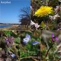 写真: 川沿いの春