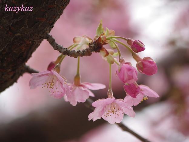 写真: 雨上がりの春