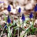 写真: 青いパラソル