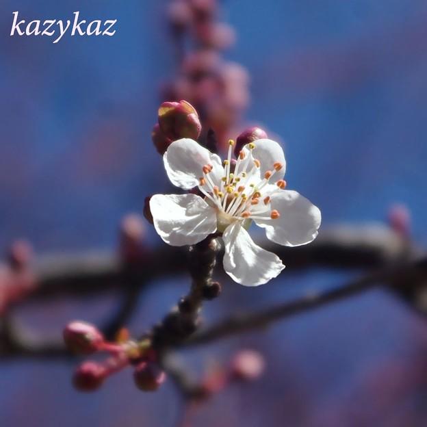 バラ園の樹木<2>