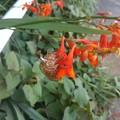 写真: 花と脱殻