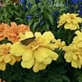 写真: 花に囲まれて