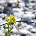 Photos: 降雪