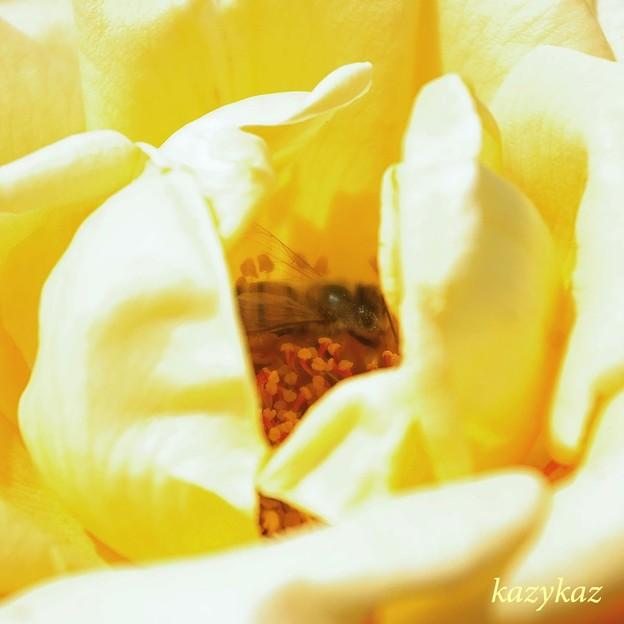 ハチ子の部屋