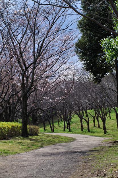 写真: 春光の道