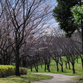 Photos: 春光の道