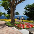 写真: 城ケ崎・花の館1