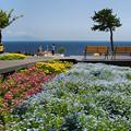 写真: 城ケ崎・花の館4