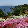 写真: 城ケ崎・花の館5