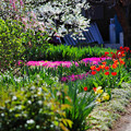 Photos: 道端の春