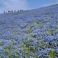 Photos: 蒼い丘