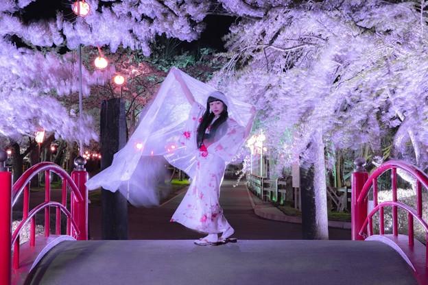 桜と風になって