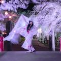 Photos: 桜と風になって