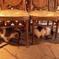 Photos: 猫ならび