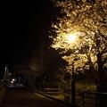 夜桜・・鶴田橋踏切付近