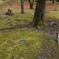 古城梅林園の苔