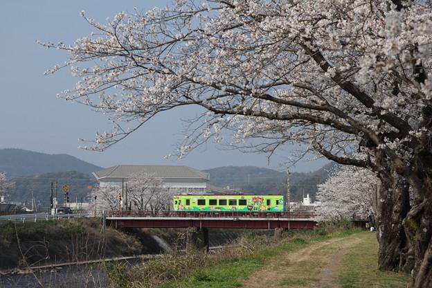 おれんじ鉄道の春