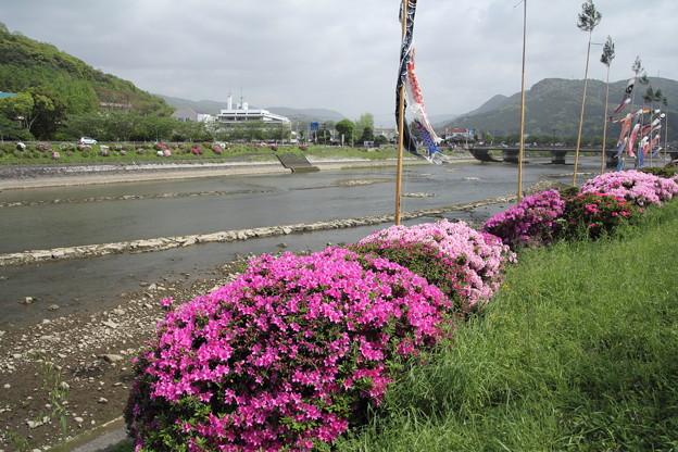 Photos: 水俣川のつつじ・・満開対岸はまだ
