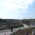 Photos: エコパークばら園・・今日は多かった