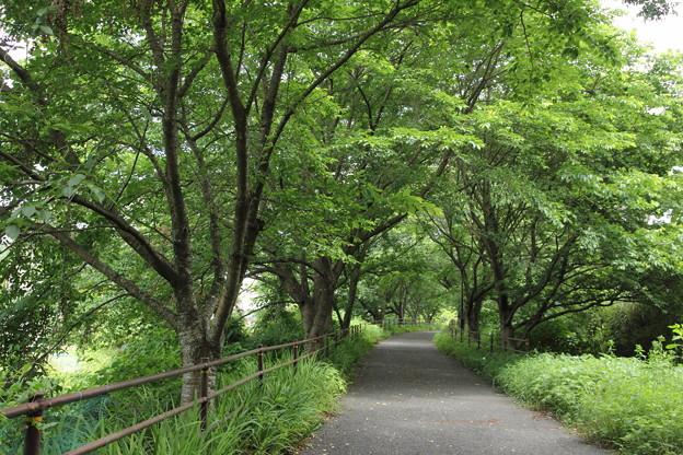 写真: 遊歩道の緑