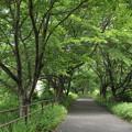 遊歩道の緑