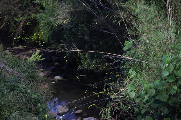 茂川の蛍・・目的の所はいなかったのでその上流