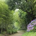 写真: 竹林園