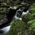 写真: 大滝の下流・・苔ですべるんです
