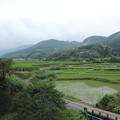 写真: 稲はすくすく成長してます