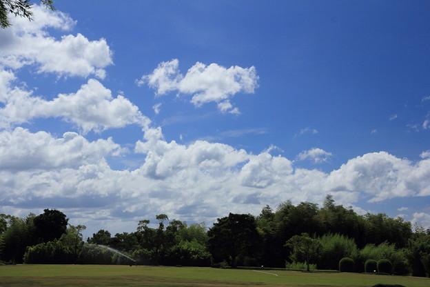 Photos: 夏空と竹林園