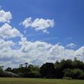 夏空と竹林園