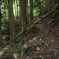 写真: 倒木で道をふさぐ