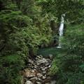 下流の小滝も少ないが見れる