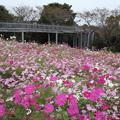 写真: 花びらがいっぱい
