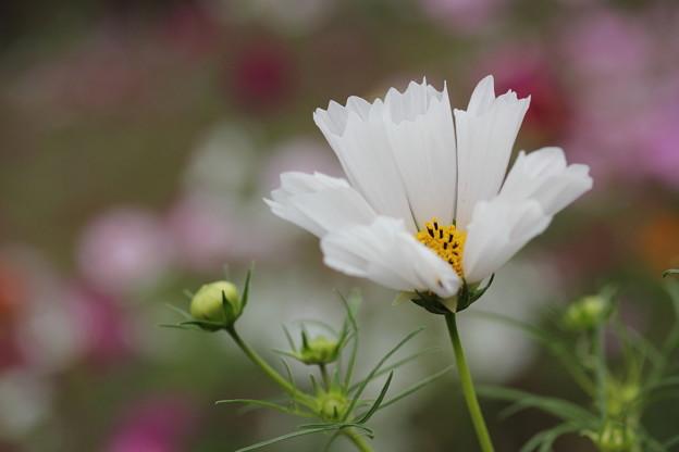 筒状の花びら