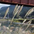 鉄橋下のススキ